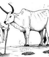 B e la vacca